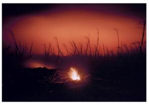 Sugar Cane Burn, Maui, H © Elaine Mayes
