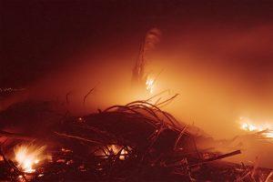 Maui Cane Fire © David Ulrich